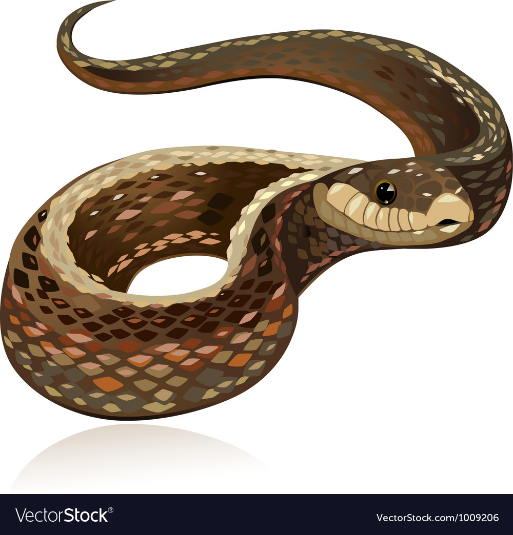 Snake5 vector image
