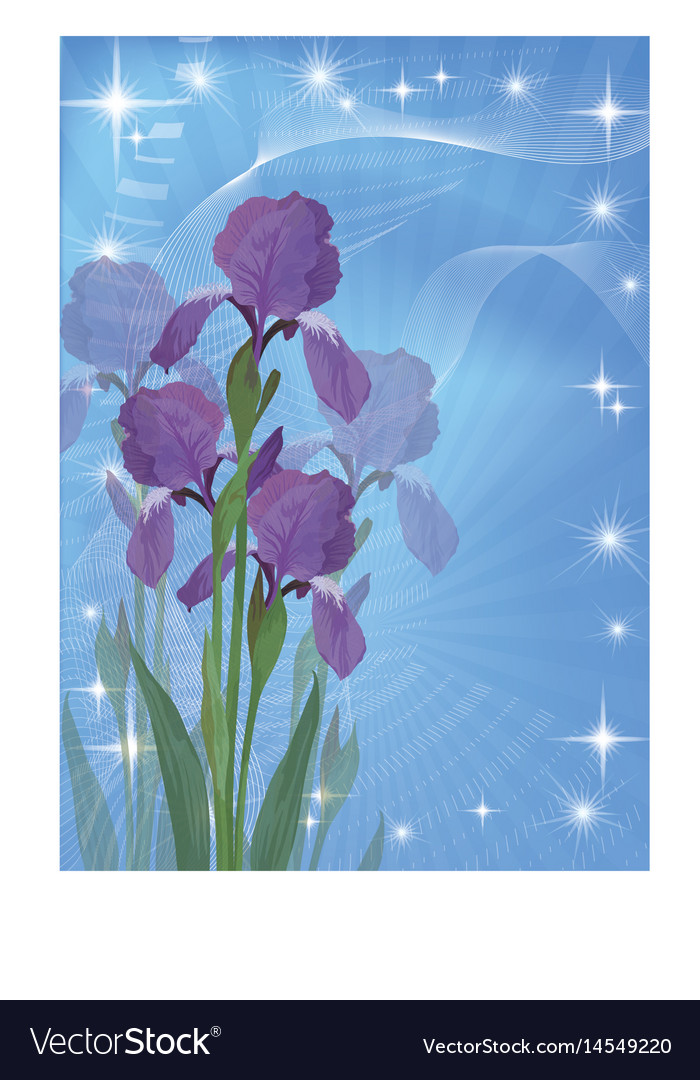 Flowers iris for holiday design vector image