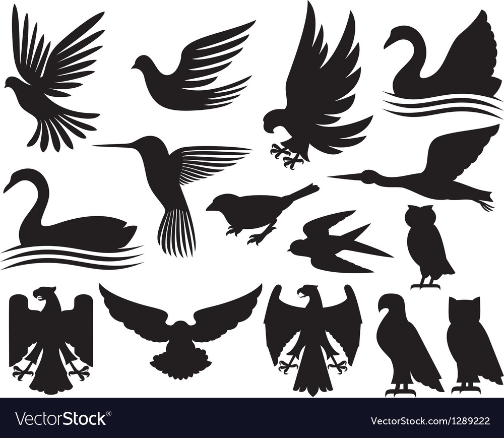 Set of birds silhouettes vector image