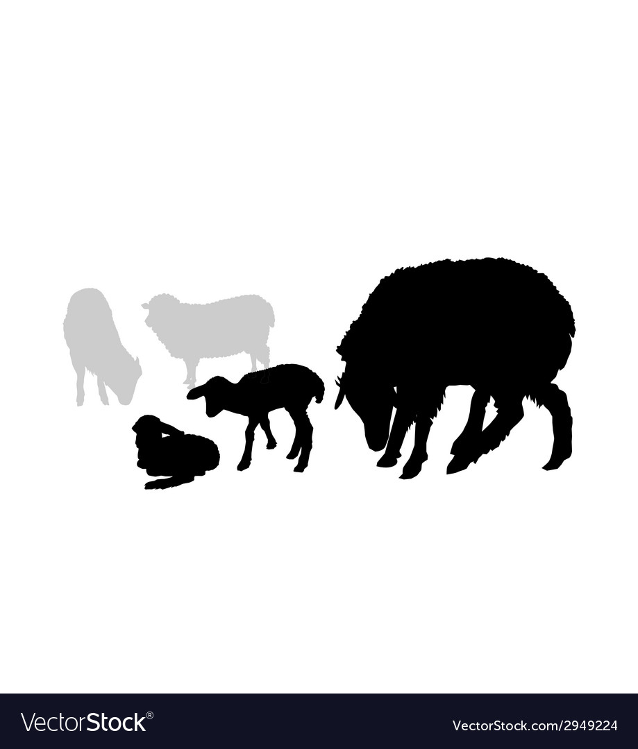 Sheep and Lamb composition vector image
