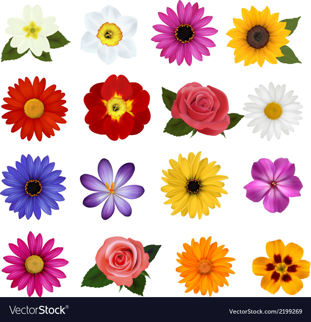 Big collection of colorful flowers vector image