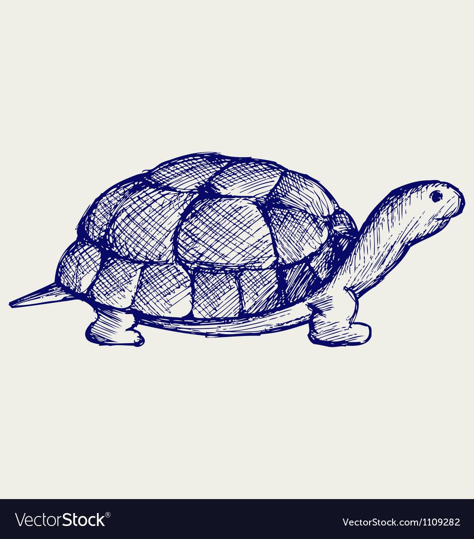 Ear tortoise vector image