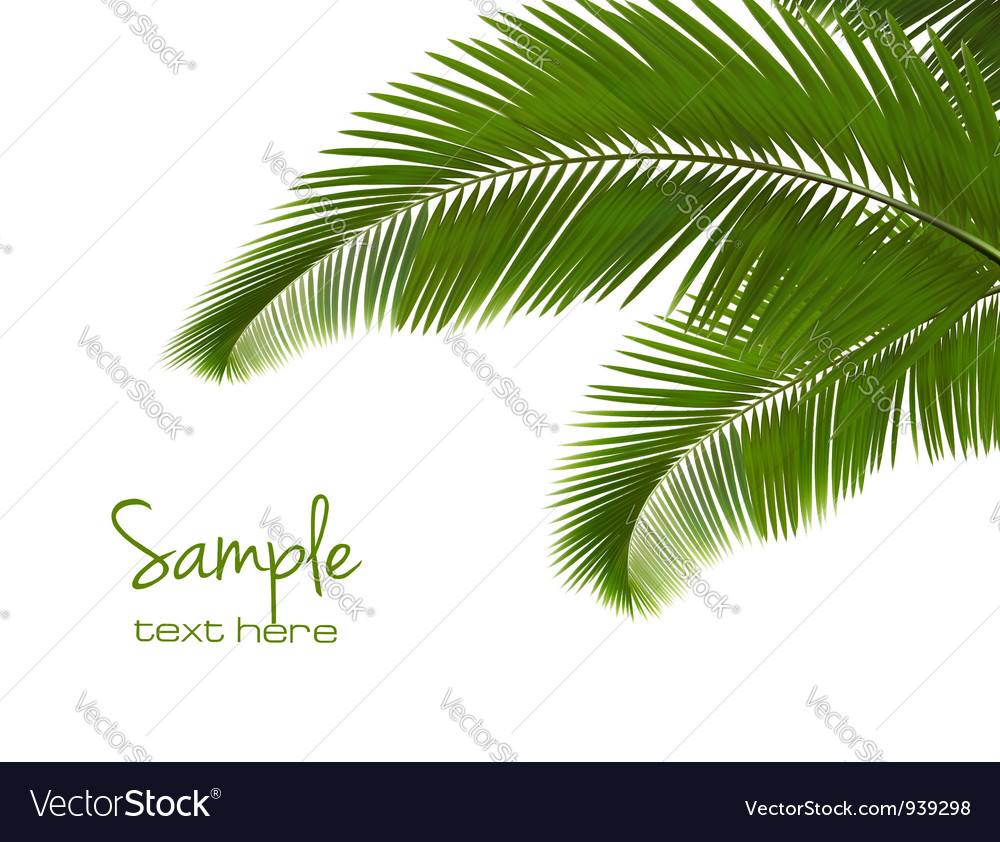 Palm leaves on white background vector image