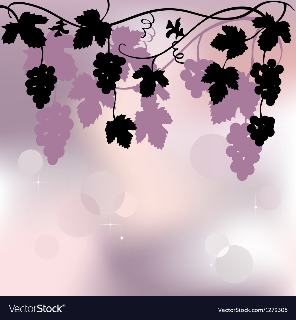 Plant background with grapes vector image