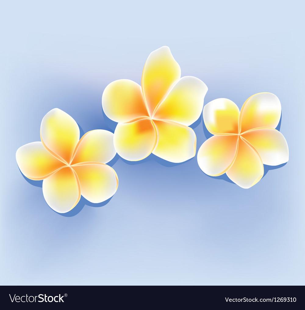 Jepun flower vector image