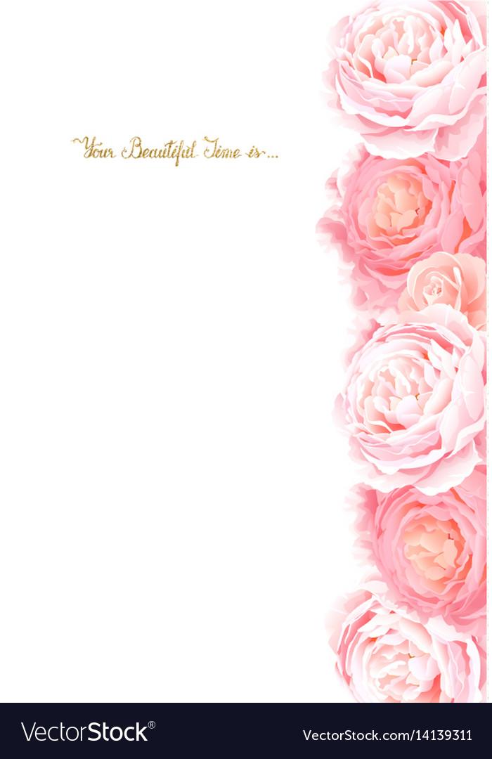 Elegance flowers frame of color roses composition vector image