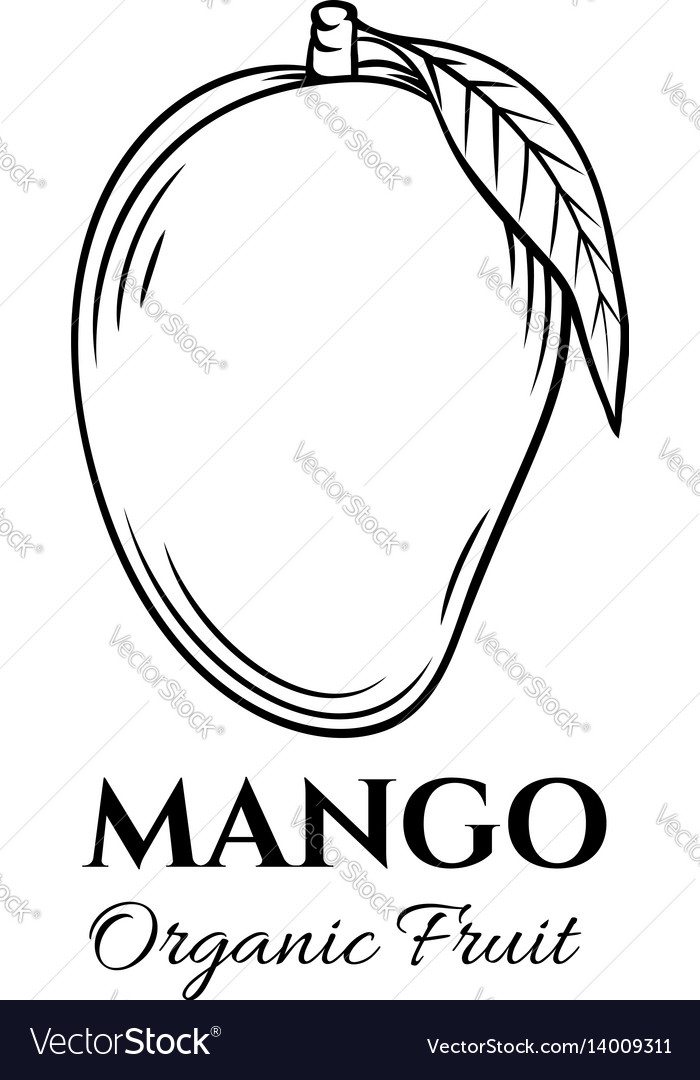 Hand drawn mango icon vector image