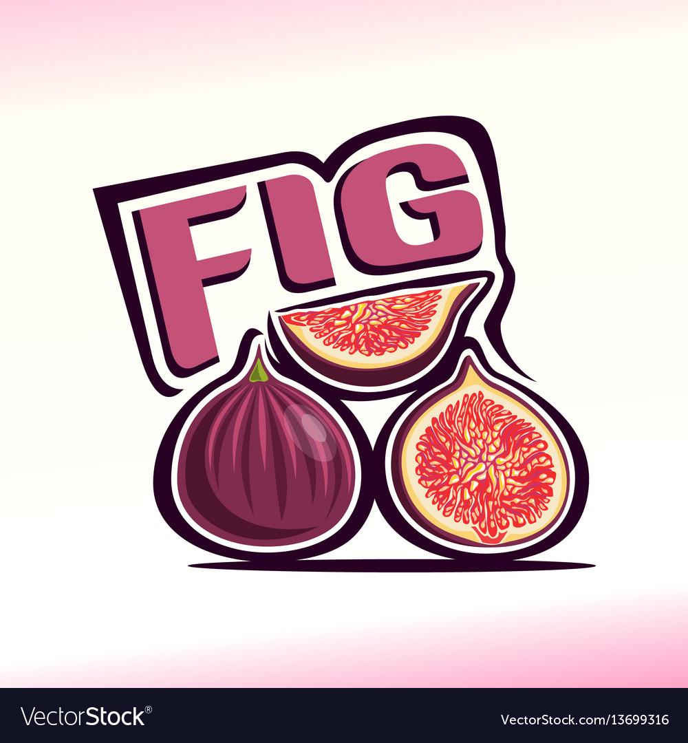 Fig still life vector image