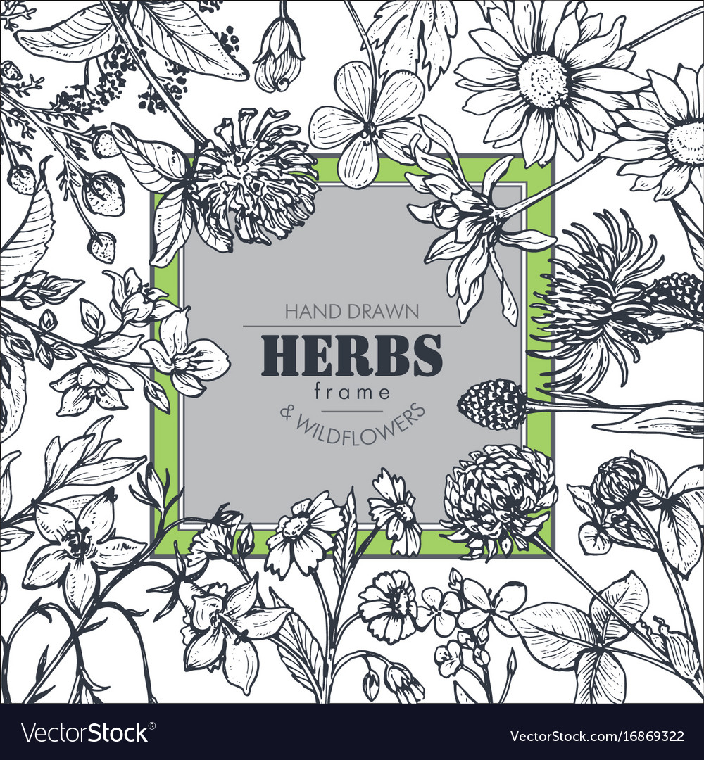 Frame with herb and wildflower elements vector image