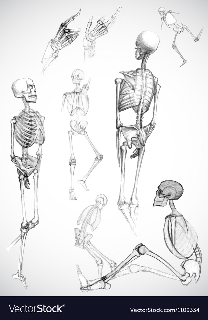 Sketch of skeletons - vector image