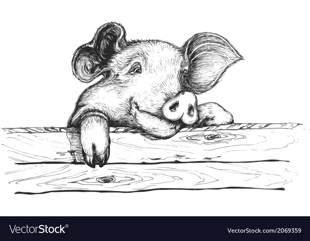 Sly pig vector image
