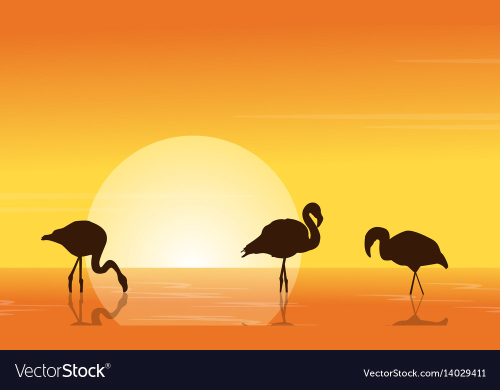 At sunset flamingo on lake scene vector image
