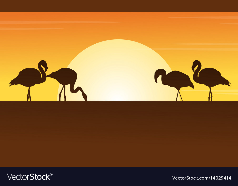 At sunset flamingo scene silhouettes vector image