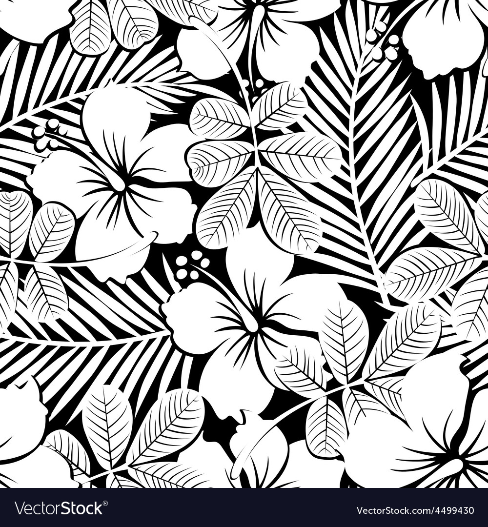 Black and white tropical hibiscus flowers and vector image