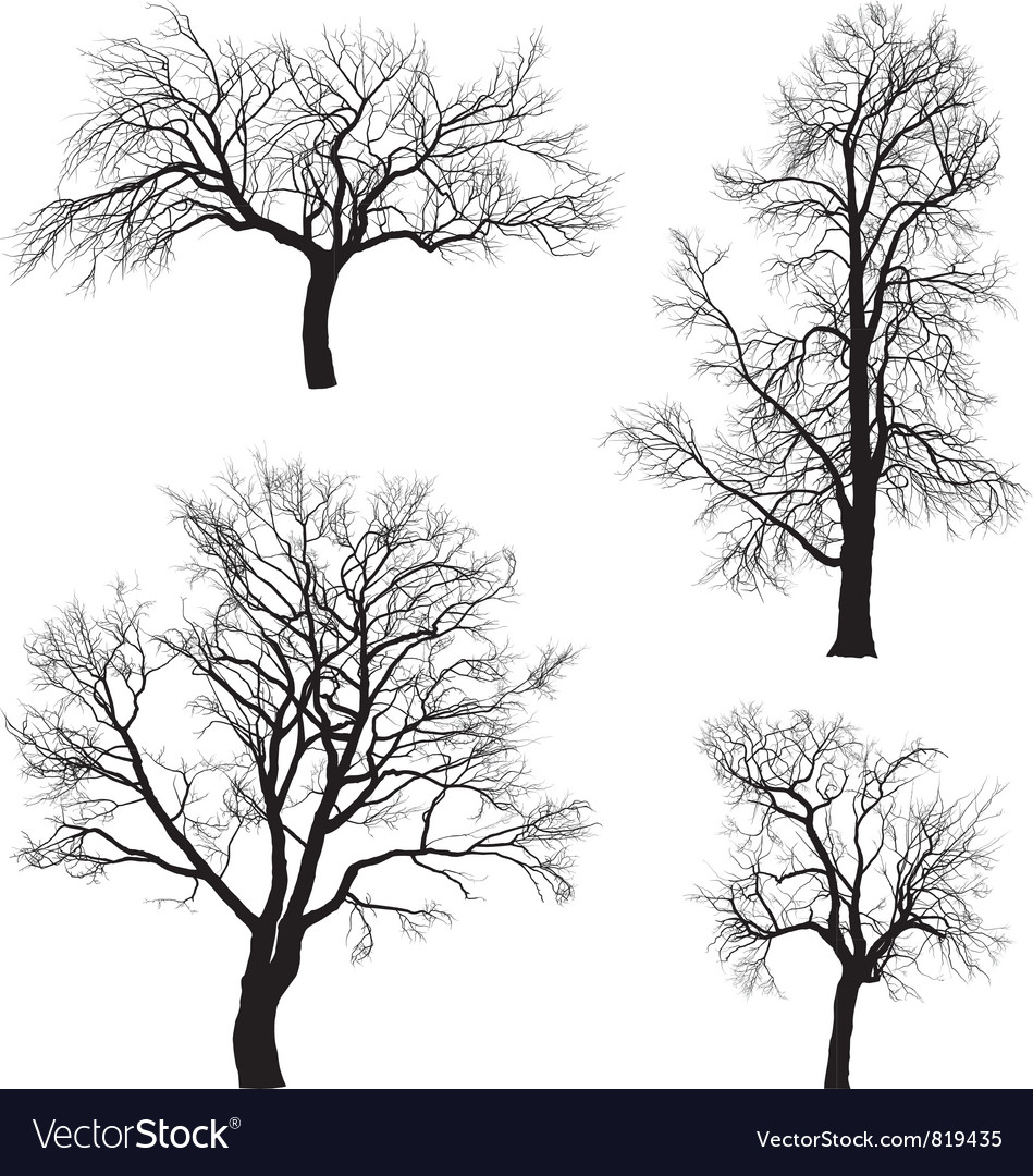 Walnut and chestnut trees vector image