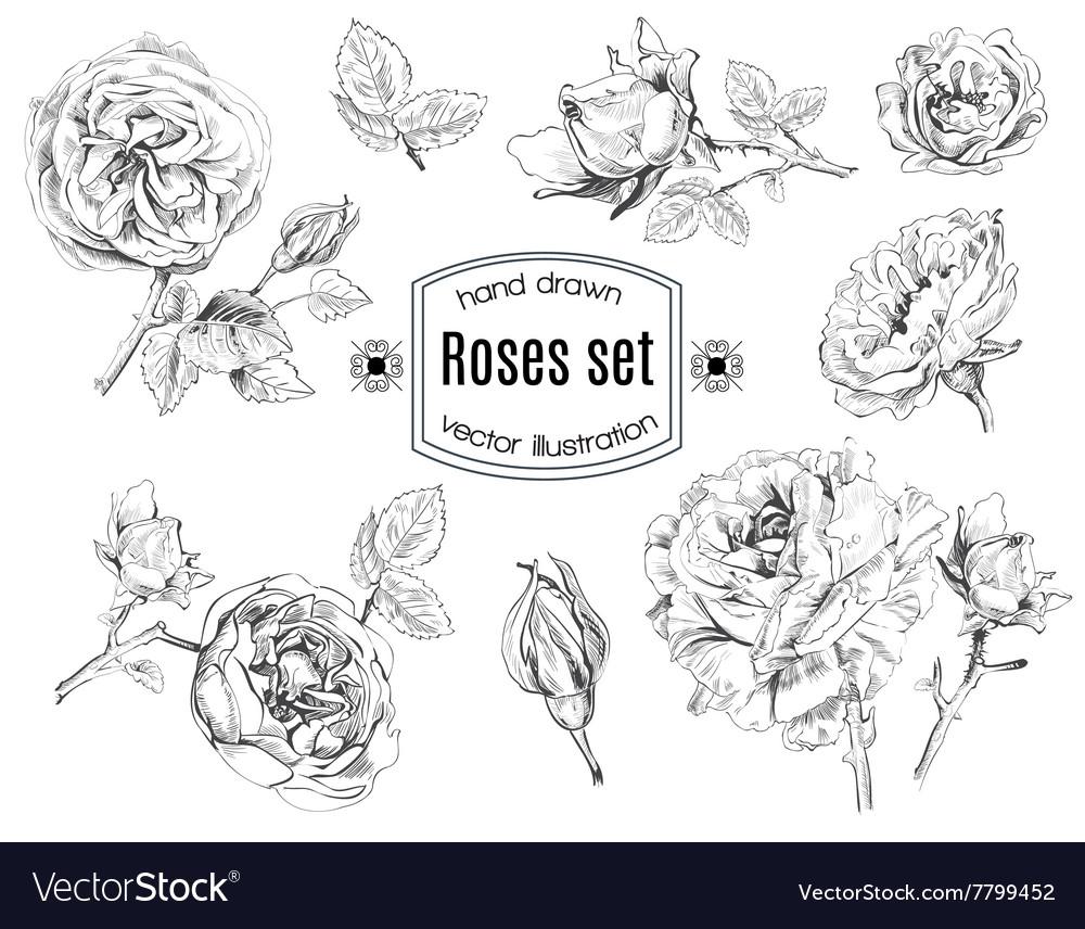 Rose set vector image