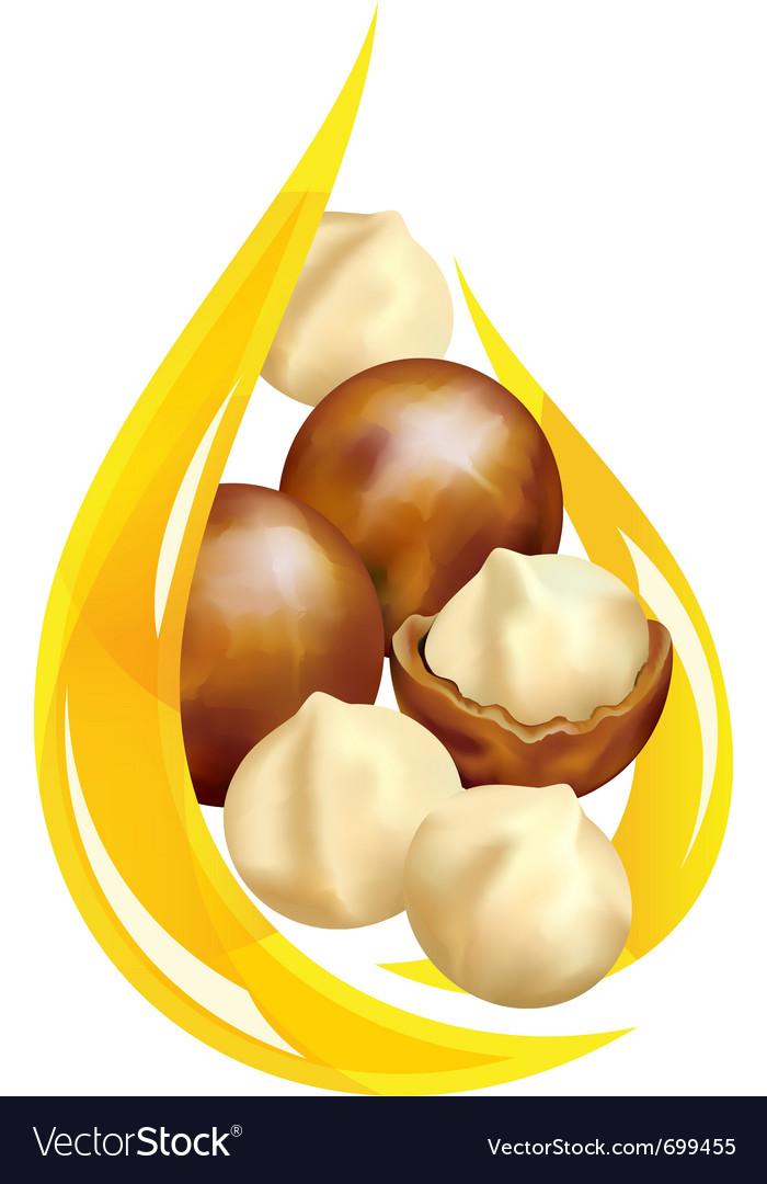 Macadamia oil vector image
