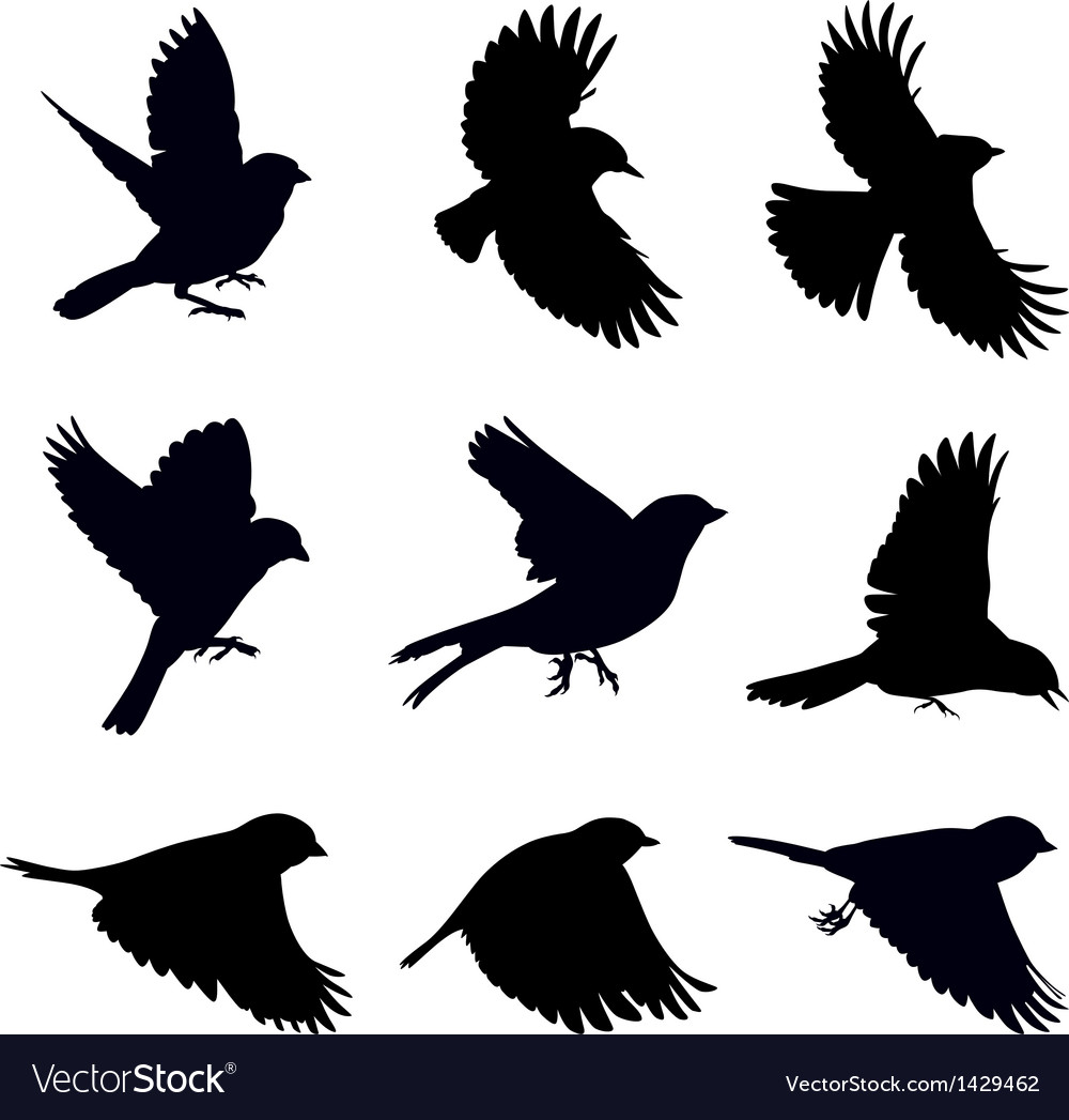 Silhouettes of birds vector image