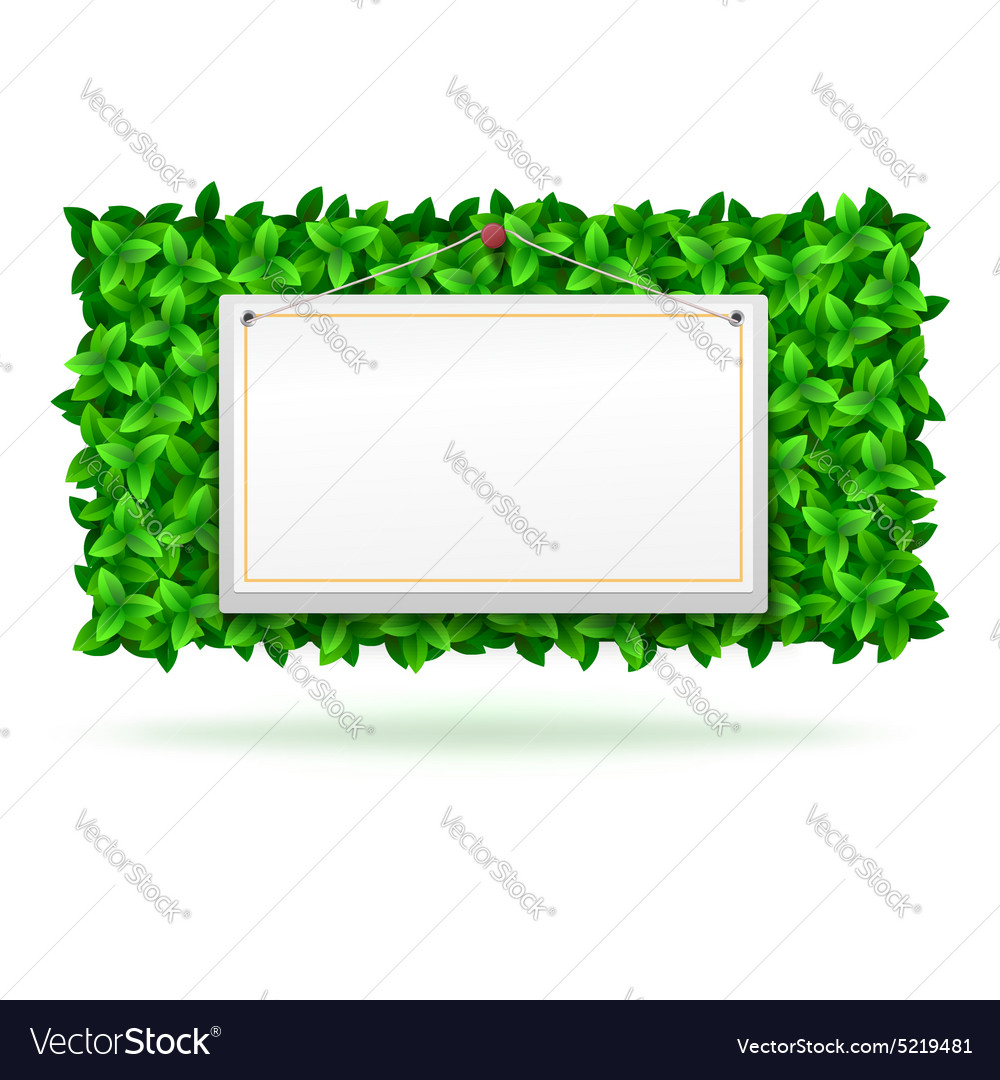 Summer background leaves vector image