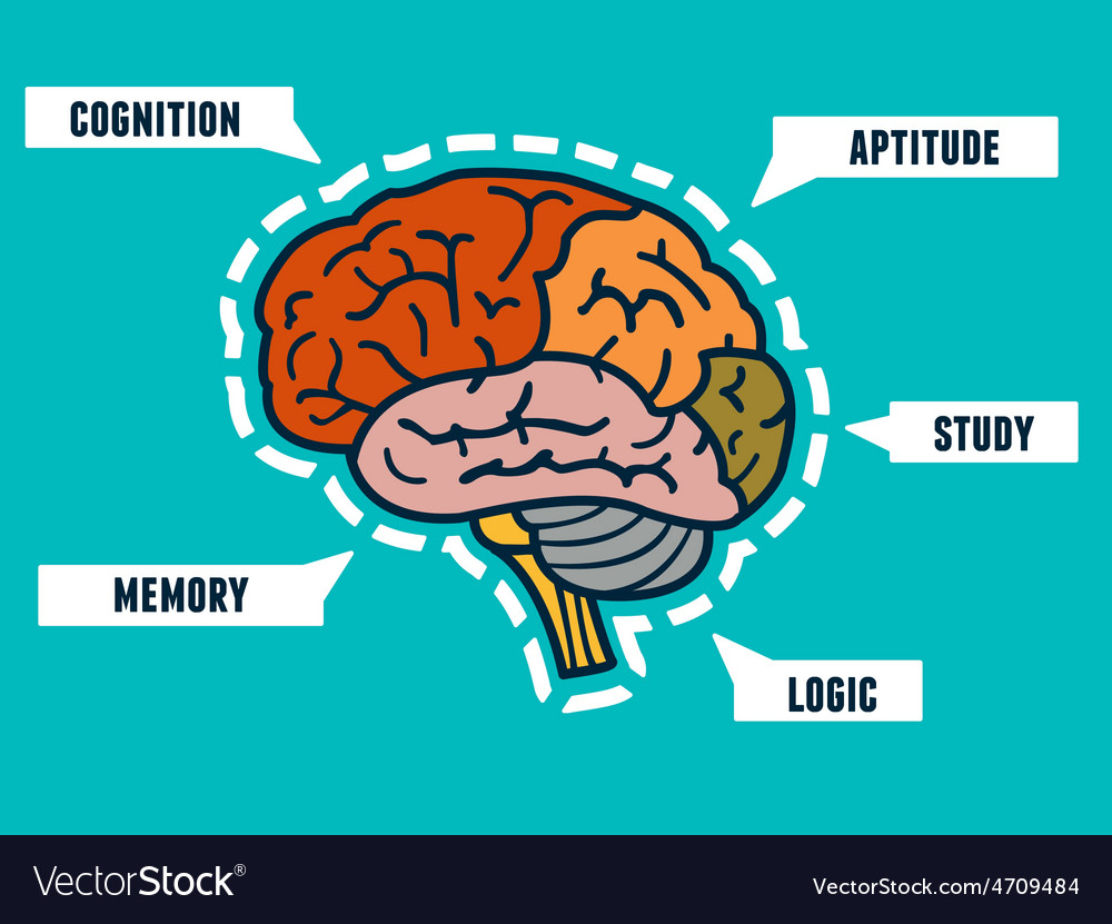Capabilities of the human brain Mindmap and vector image