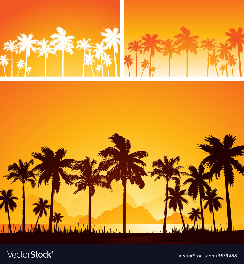 Summer sunset background with palm trees vector image