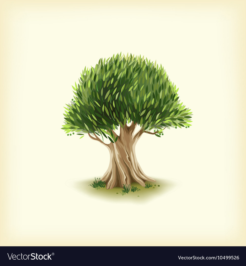 Color of the olive tree Royalty Free Vector Image