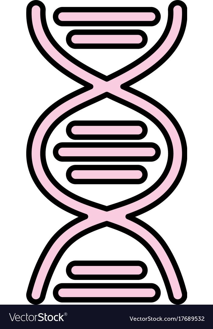 Dna science cell medicine molecule vector image