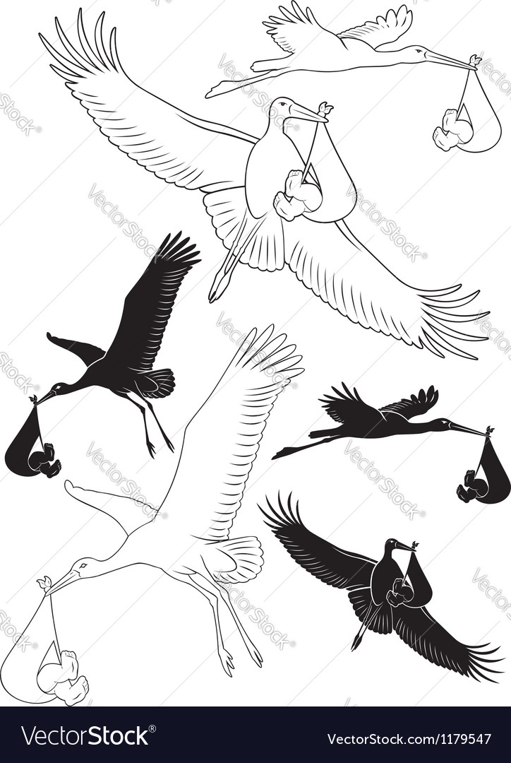 Stork with a baby Vector Image