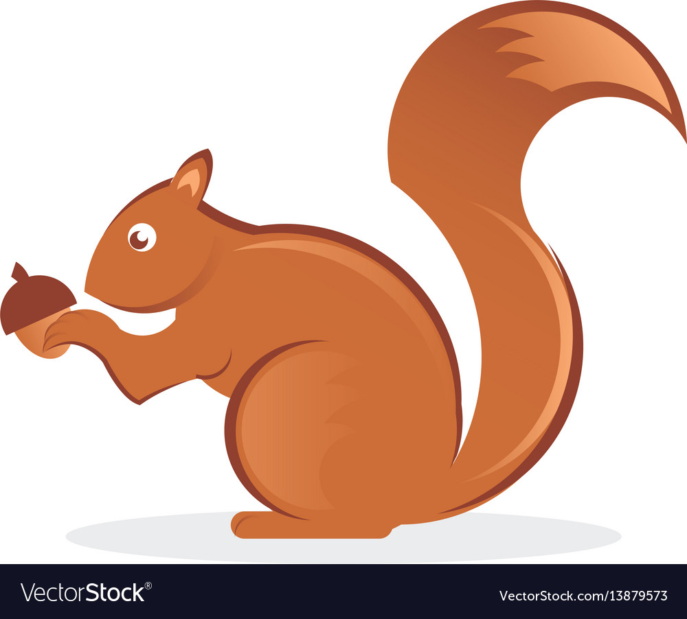 Squirrel with nut vector image