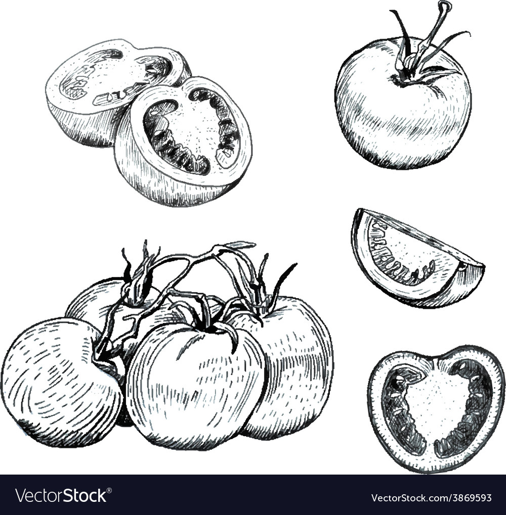 Ink tomatoes sketches set vector image