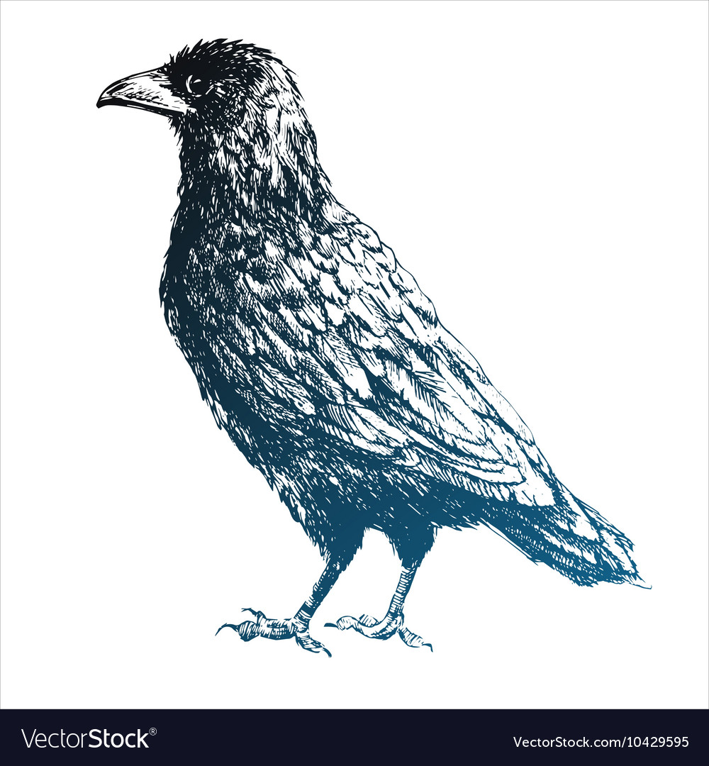 Beautiful raven vector image