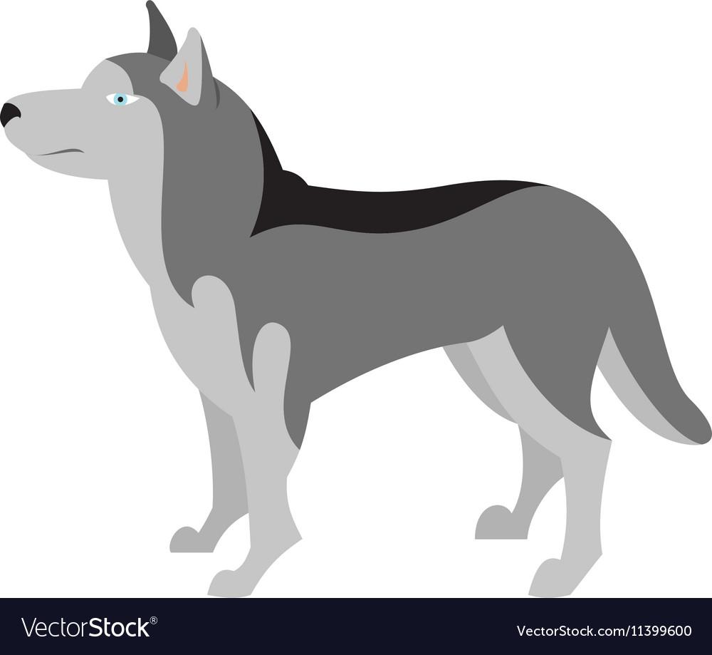 Siberian husky dog breed vector image