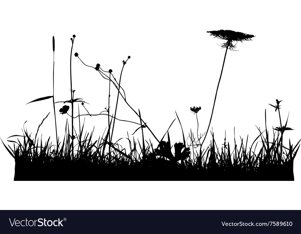 Wild plants and flower silhouettes vector image