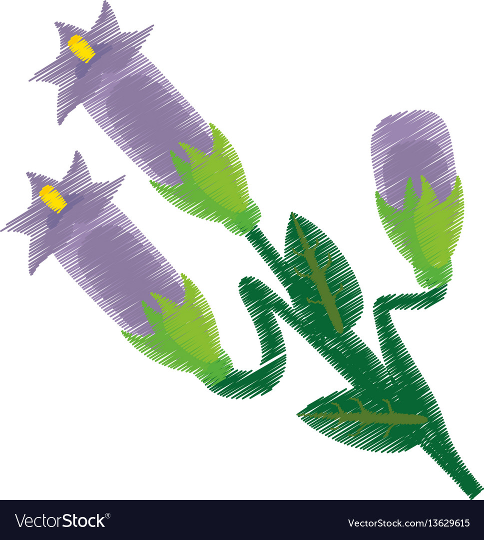 Drawing crocus flower ornament vector image