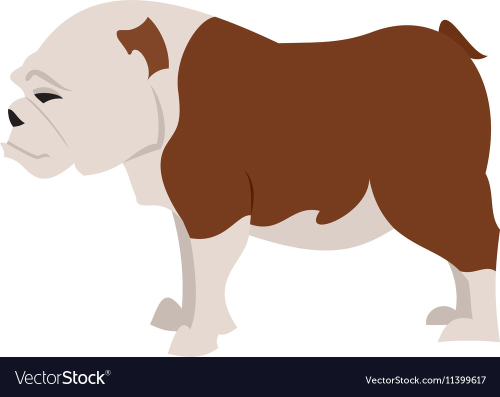 English bulldog breed vector image