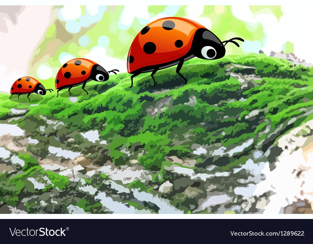 Lady bug2 vector image