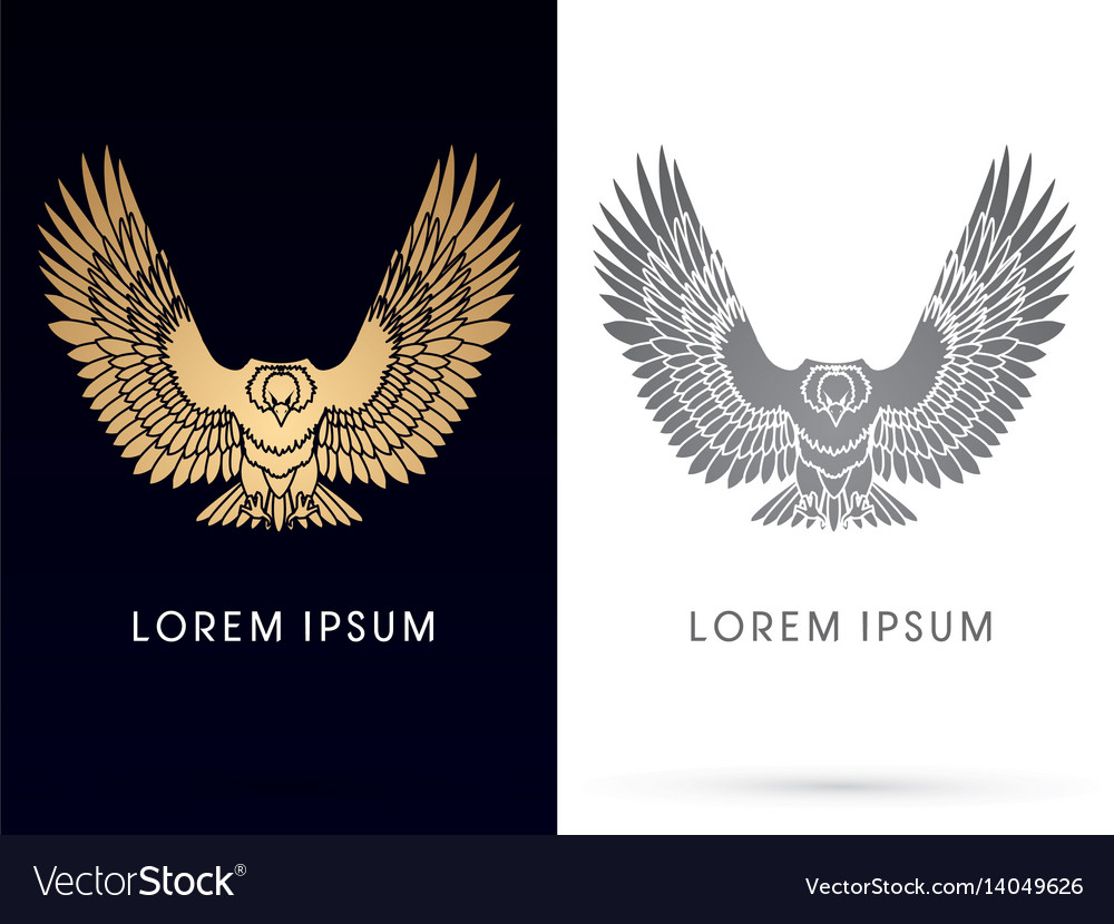Eagle fly front view vector image