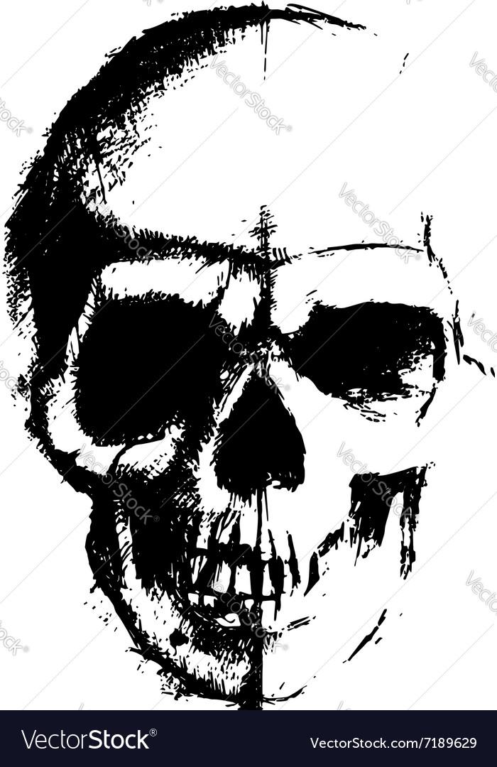 Skull sketch element vector image