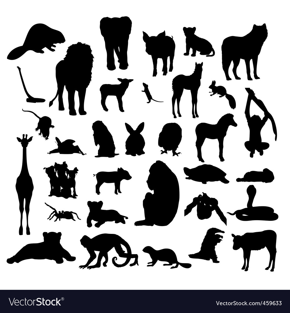Animals white background 23 vector image