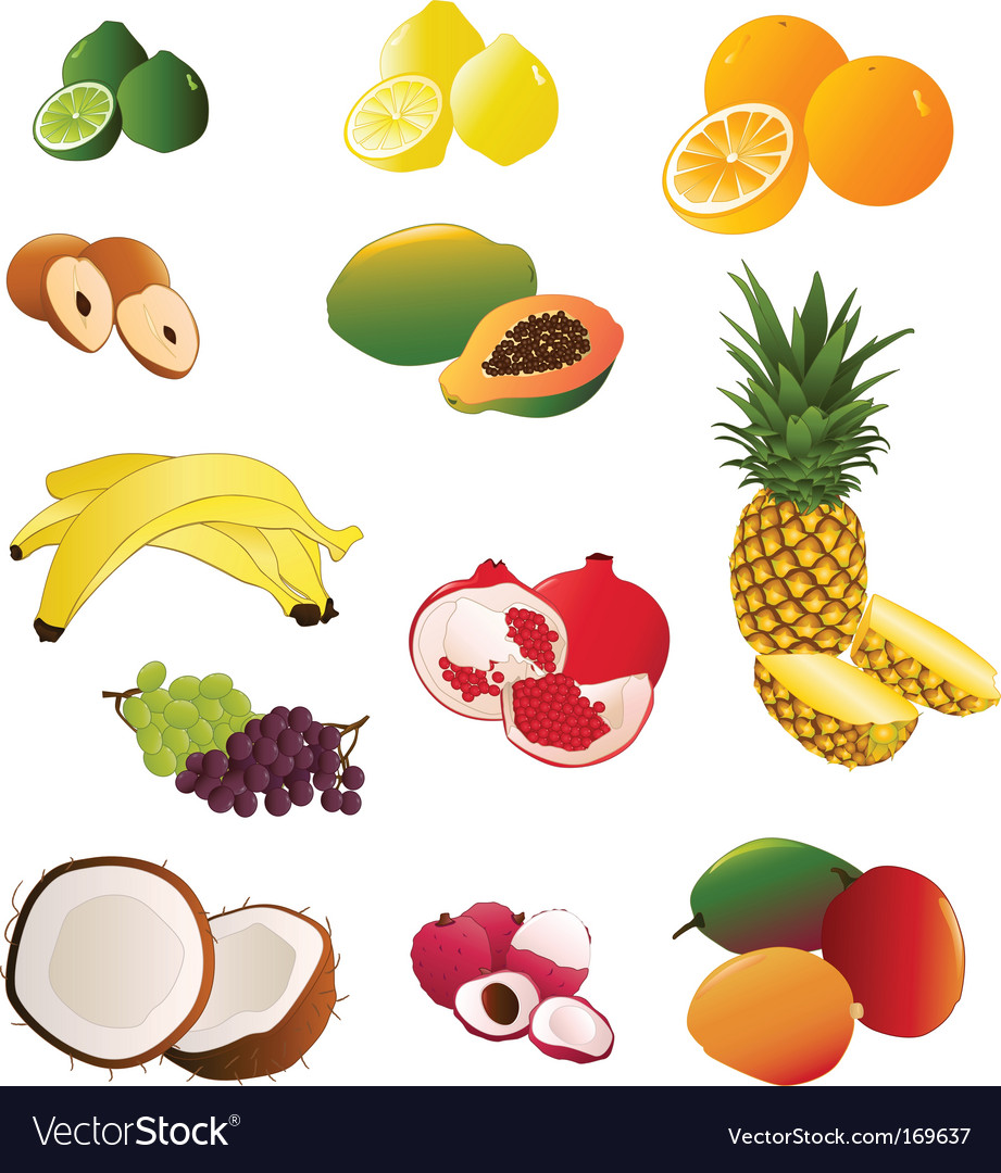 Indian fruit vector image