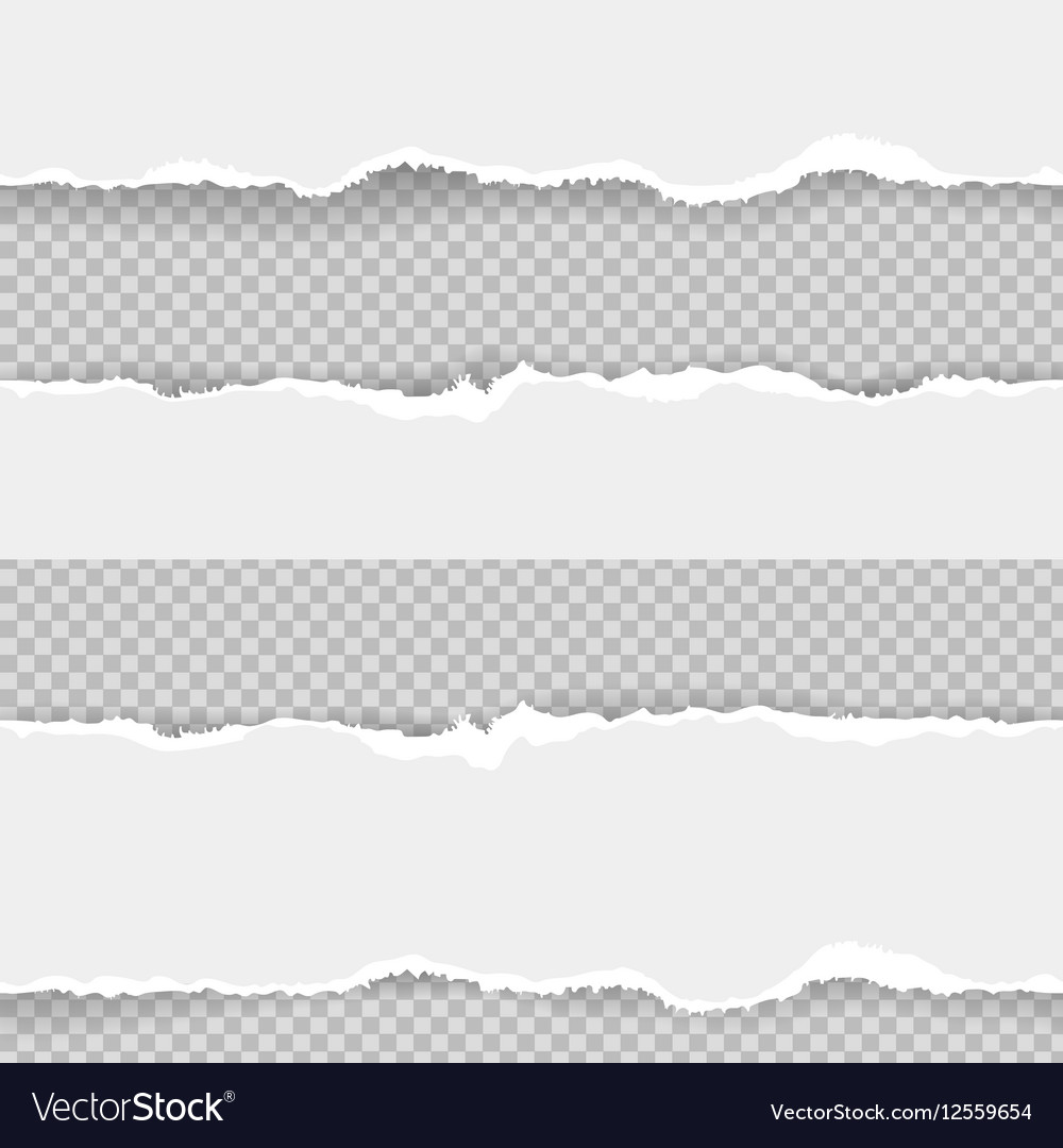 Collection of seamless ripped torn paper vector image