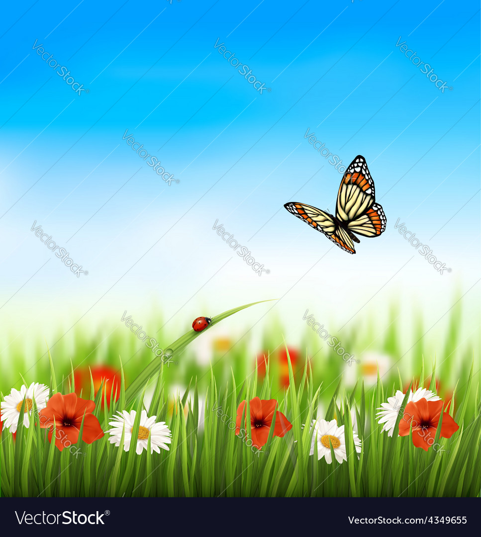 Nature summer colorful flowers with butterfly vector image