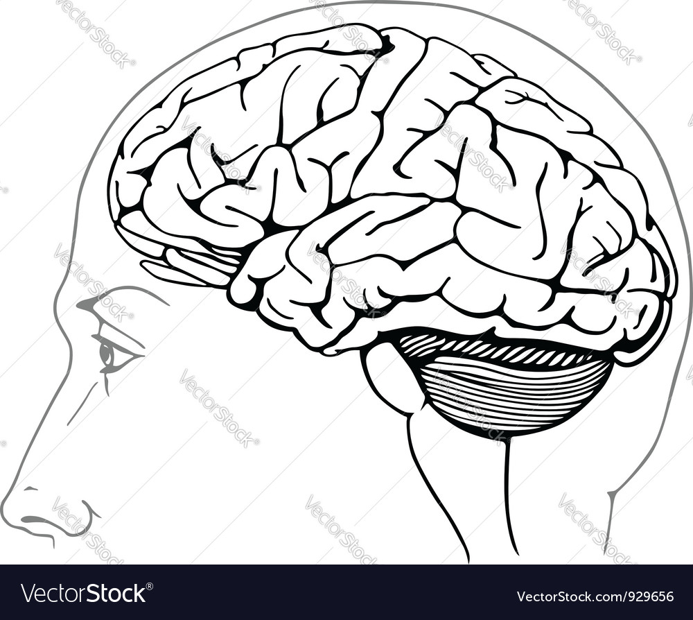 The human brain coloring book diamond - Human Brain Vector Image