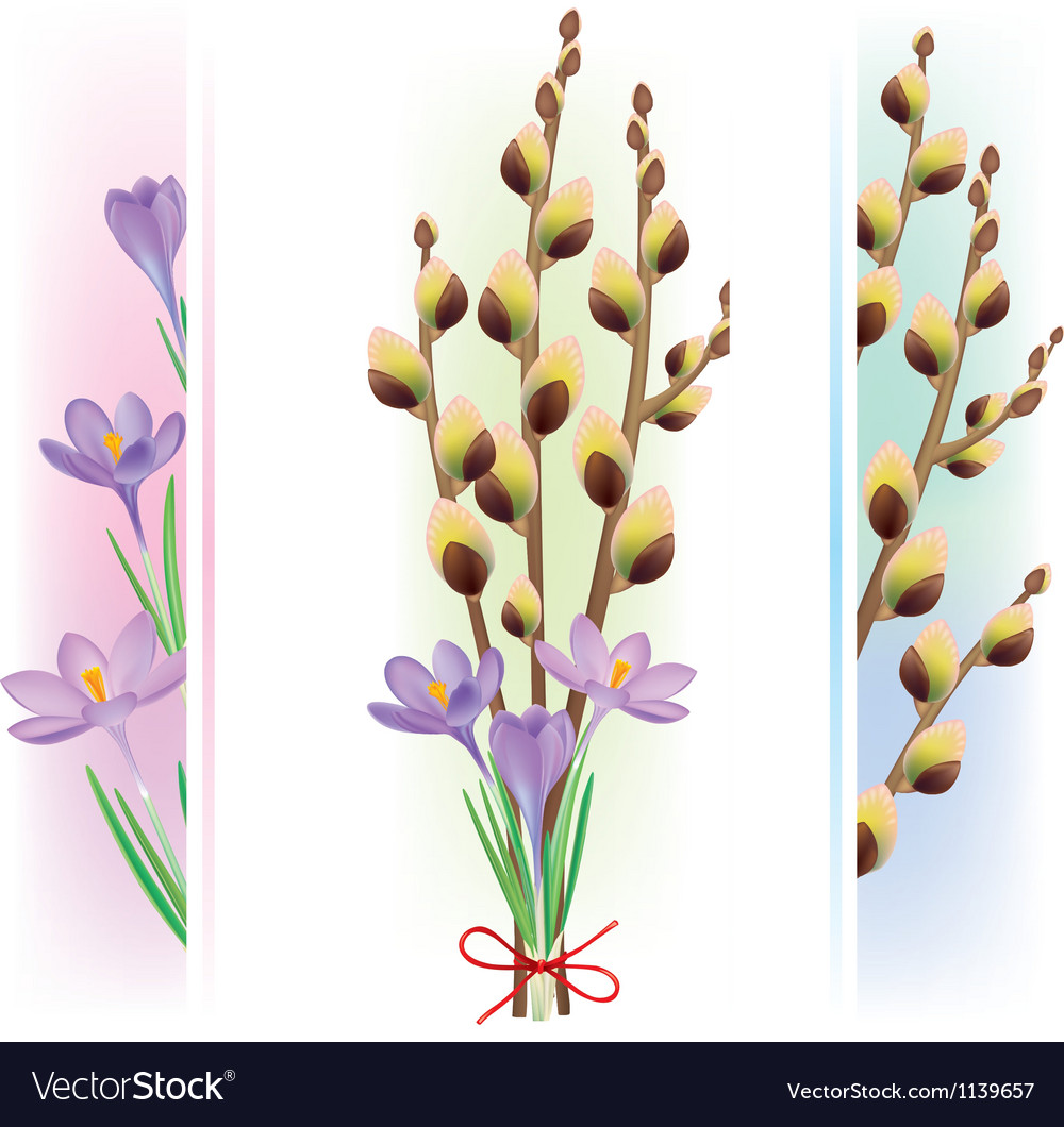 Easter symbols crocuses and pussy willow vector image