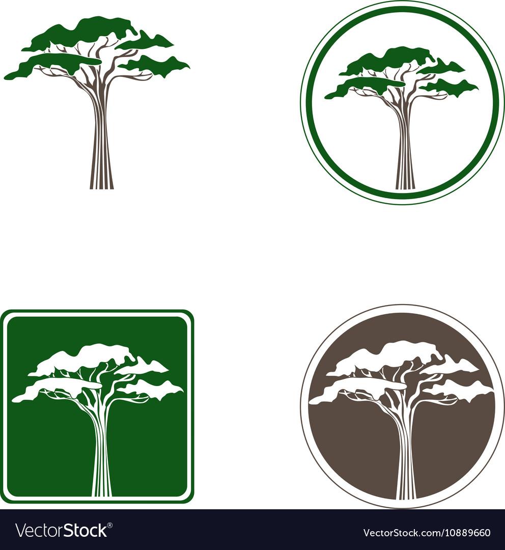 Acacia Tree Logo vector image