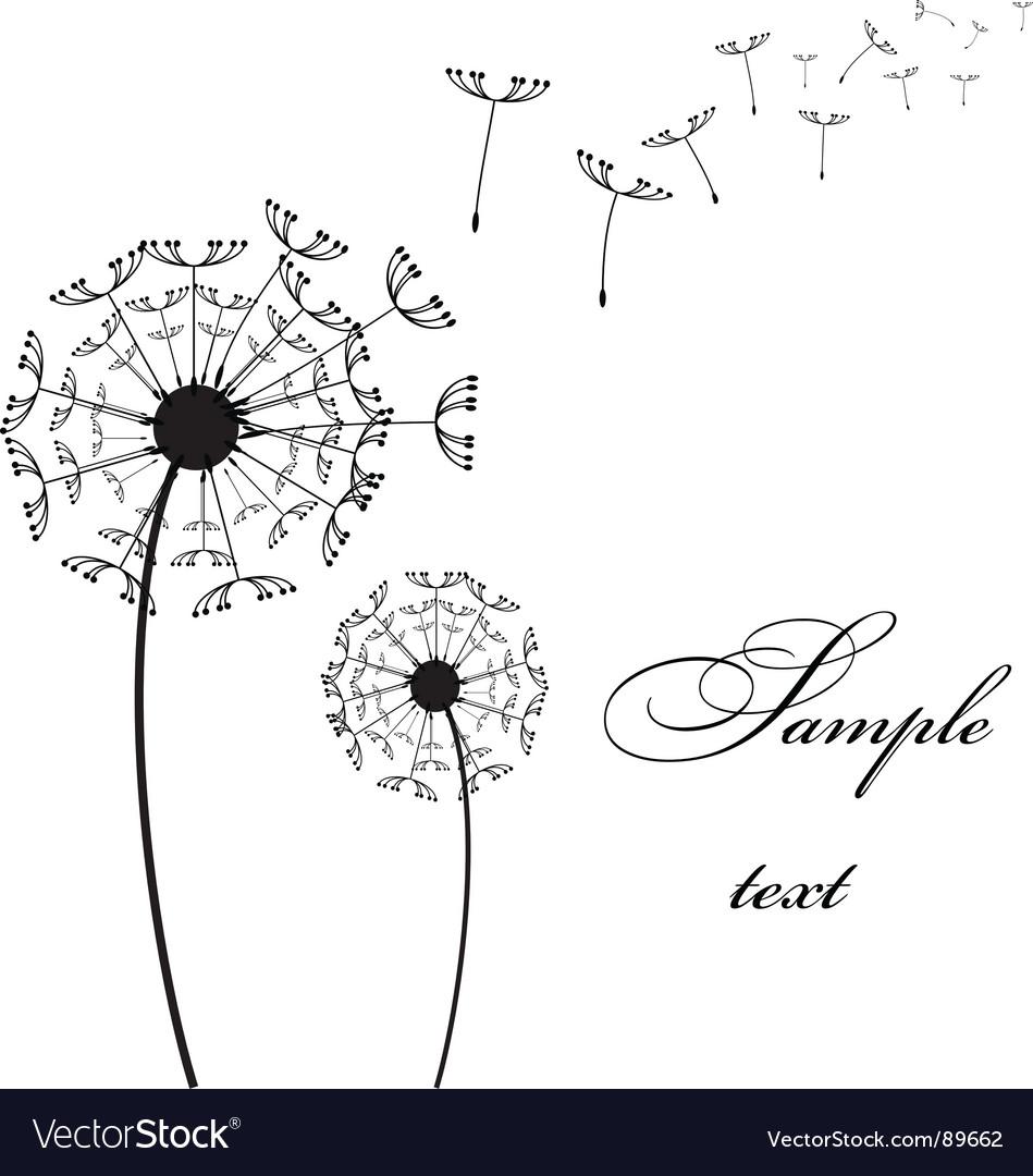 Two dandelion vector image