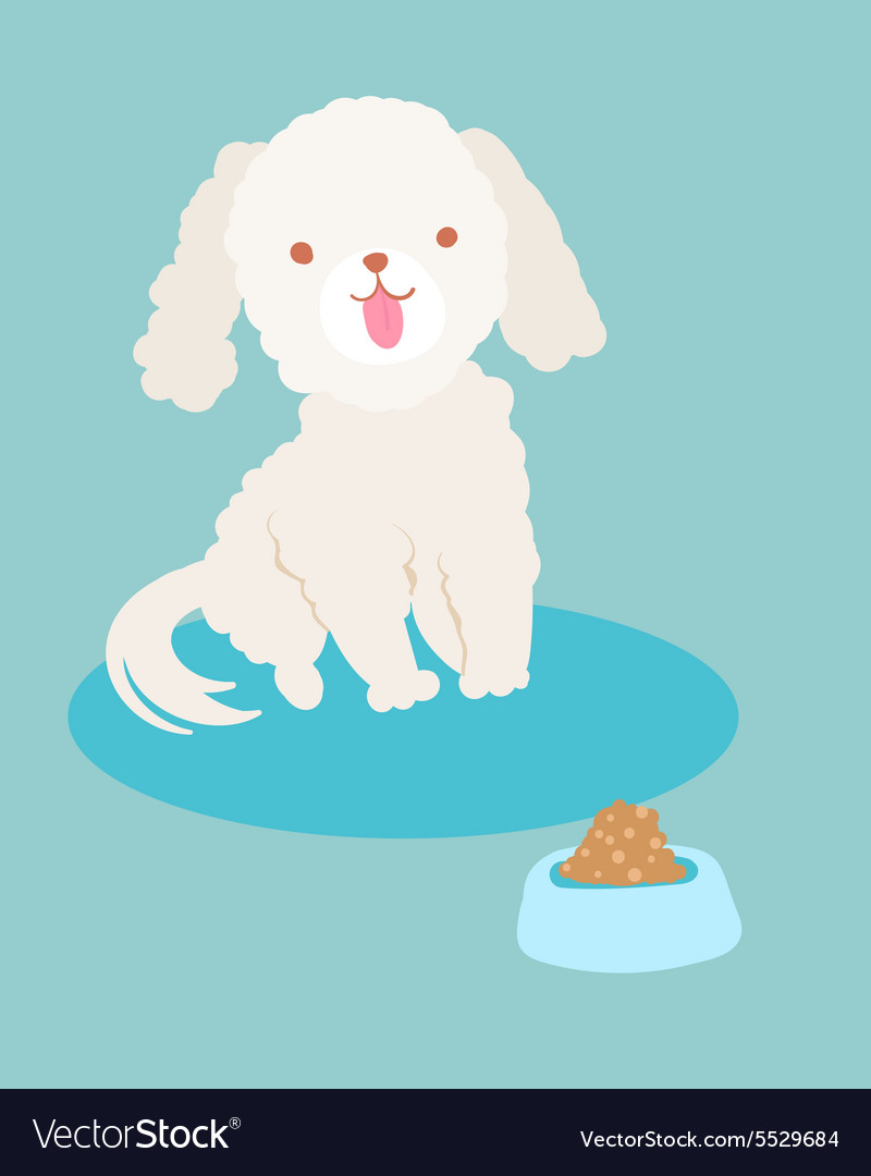 White poodle dog vector image