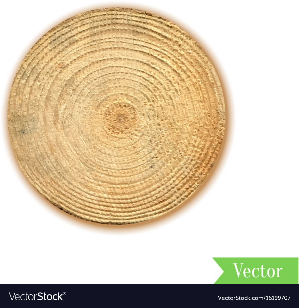 Tree stump round cut with annual rings wooden vector image