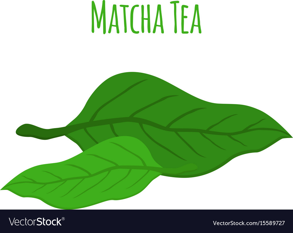 Matcha tea leaves - natural organic plant flat vector image