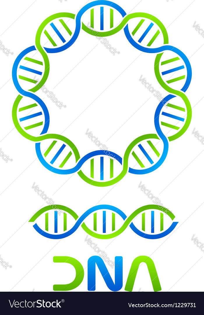 DNA Strand in circle and seamless string Vector Image